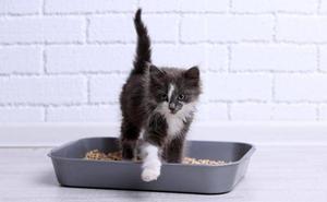 Consejos para elegir la mejor arena y arenero para tu gato