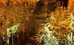 Tres detenidos con un cultivo «domotizado» de 900 plantas de marihuana en una nave de Berja