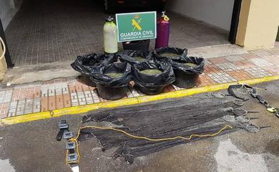 Detienen a tres gaditanos en Almuñécar por capturar ilegalmente 206 kilos de anémonas