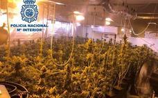 Investigan al teniente alcalde del PP de El Valle por tener 265 plantas de marihuana