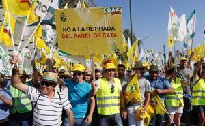 UPA espera que Bruselas apruebe «lo antes posible» la retirada voluntaria de aceite de oliva