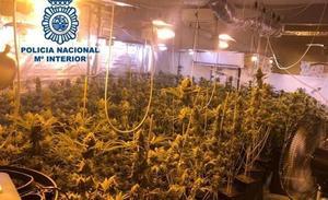 Dimite el teniente de alcalde de El Valle investigado por cultivo de marihuana