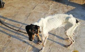 La Policía Local de Motril rescata a un perro maltratado al que mantenían atado y desnutrido