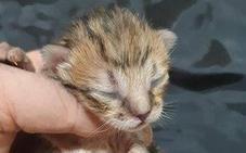 Mueren dos gatitos «asados de calor» tras ser abandonados