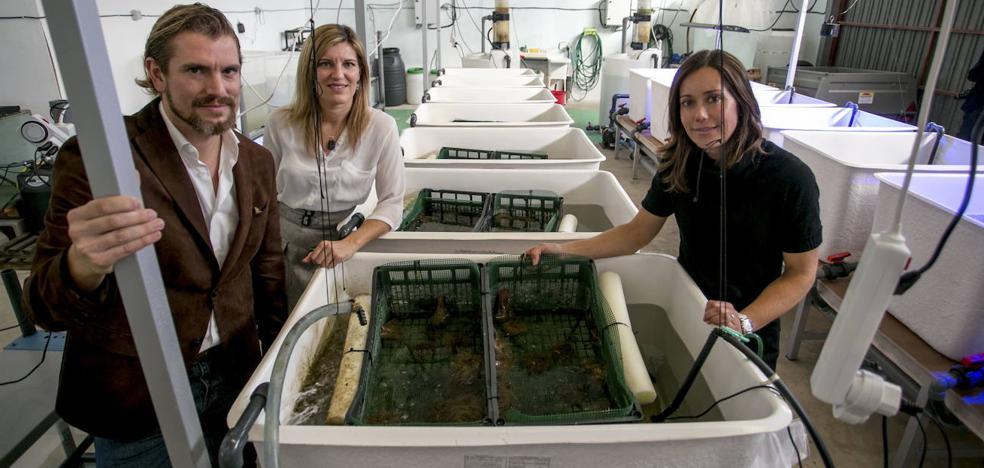 La acuicultura sostenible, una alternativa para las anémonas