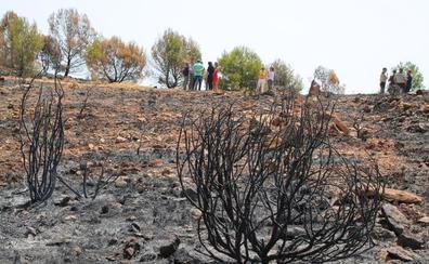 La restauración forestal tras el incendio de Terque dará comienzo antes de primavera