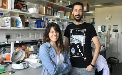 Científicos españoles logran alargar la vida a través de una bacteria