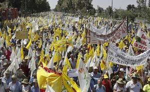 Tras Jaén y Sevilla, ya se prepara una gran movilización en Madrid contra el 'dumping' del aceite de oliva