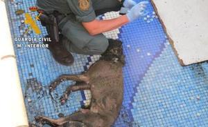 Seis investigados por maltrato y abandono animal en Granada