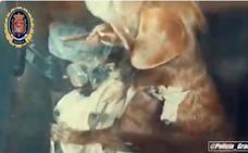 El vídeo de la Policía Local de Granada que advierte a los dueños de los perros: «Esperamos no tener que denunciar»