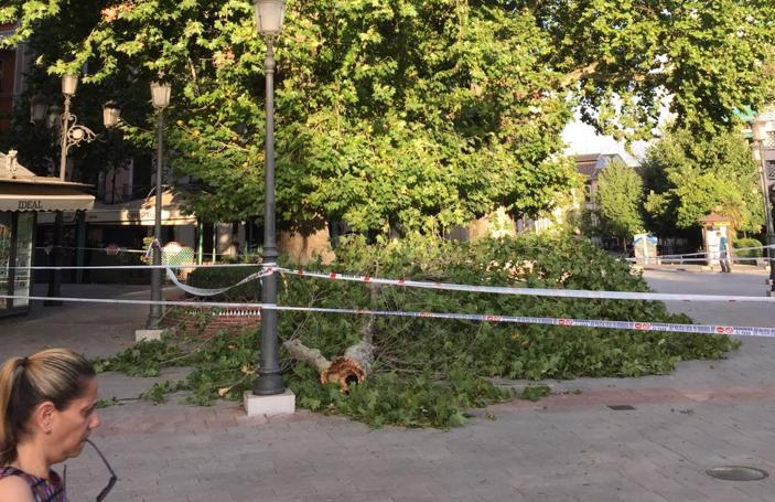 Así está la Fuente de las Batallas con la enorme rama que ha caído
