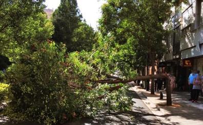 Cae otro árbol en Granada, ahora en plena Avenida de la Constitución