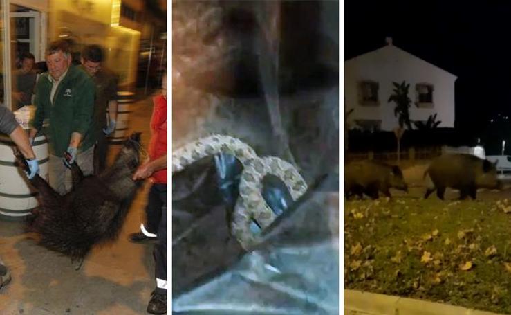 7 animales salvajes que pasearon libremente por Granada