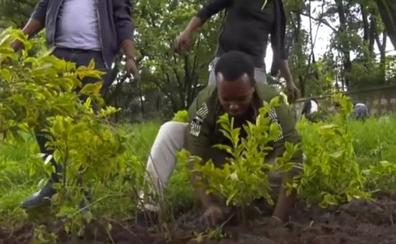 Así se plantan 350 millones de árboles en 12 horas: récord del mundo