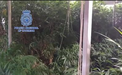 Macroplantación oculta de marihuana en un polígono industrial: la Policía Nacional destapa un sofisticado invernadero de 2.000 plantas