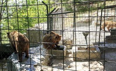 Los últimos osos abandonan Peña Escrita y tres empresas optan a reabrirlo para el turismo