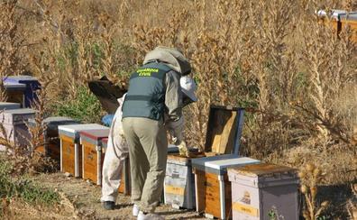 'Cazan' al ladrón que robó 58 colmenas valoradas en 15.000 euros en Alhama
