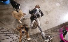 Motril sacará a concurso la gestión de la perrera, tras dos años sin contrato