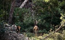 La Junta publica las bases reguladoras de las ayudas forestales que llevaban siete años sin convocarse