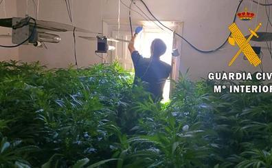 Dos detenidos y 1.095 plantas de marihuana intervenidas en Pechina
