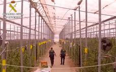 Almería desbanca a Granada como la mayor despensa de marihuana de España