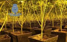 Macrooperación 'Verde' contra la droga en España: 4.500 kilos de marihuana, 5.000 de hachís, 1.700 de cocaína y 13 de heroína