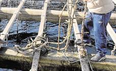 El mejillón, un aspirador de la contaminación del agua