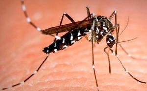¿Son efectivas las pulseras repelentes y los aparatos de ultrasonidos contra los mosquitos?