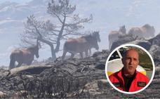 La genial maniobra de un piloto para salvar a 27 caballos de morir quemados en el incendio de La Granja