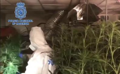 La Policía desmantela un sofisticado invernadero clandestino de marihuana en un piso