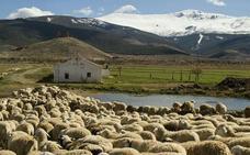 Ganaderos de Granada muestran su oposición al informe de la ONU que pide la reducción del consumo de carne