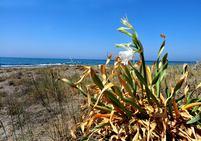 Joyas botánicas de la costa