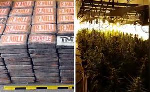 Operación Mansalva de la Guardia Civil: cazan 475 kilos de cocaína, 1.000 plantas de marihuana y 14 detenidos