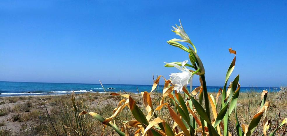 Joyas de la costa de Alborán
