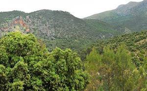 Cs se felicita por la convocatoria de ayudas forestales siete años después