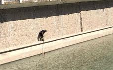 Los bomberos rescatan a un perro caído al río Genil en Granada