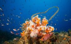SOS por los corales enredados de la Punta de la Mona