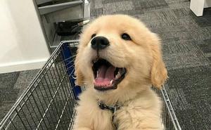 ¡No se permite la entrada a perros!
