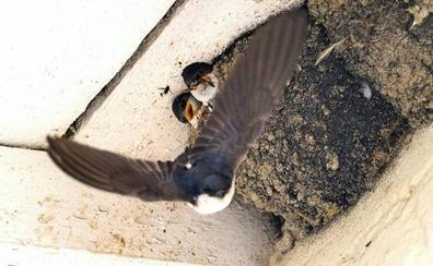Advertencia de la Guardia Civil sobre los pájaros que nos libran de insectos: «Están protegidos»