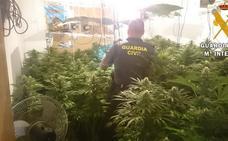Operación 'Benagi': la Guardia Civil descubre un sofisticado 'narcobloque' que cultivaba marihuana a mansalva
