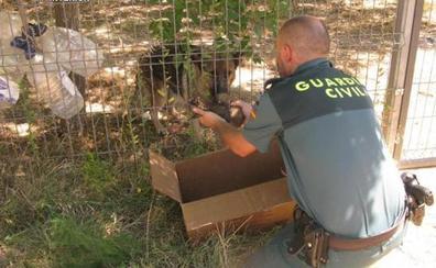 La Guardia Civil rescata a seis cachorros de pastor alemán enterrados vivos
