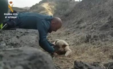 Dos guardias civiles rescatan a un perro exhausto a punto de morir en el incendio de Gran Canaria