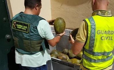 La Guardia Civil devuelve a sus propietarios 700 kilos de melones robados