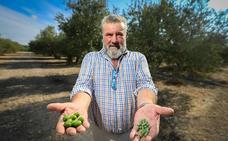 El campo granadino teme perder casi la mitad de la cosecha en el peor año de lluvia desde 2004