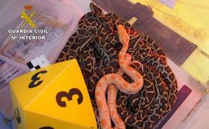 Cae una red de tráfico de especies con 200 animales con destino a Marruecos