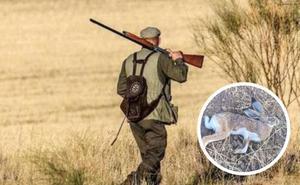 Alerta entre los cazadores por dos casos de liebres con mixomatosis en Bailén