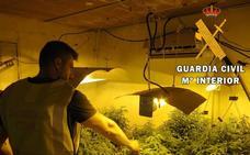 Un detenido tras hallar 835 plantas de marihuana en una vivienda de Huércal con enganche ilegal
