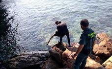 Regresan los 'cazadores' de anémonas: la Guardia Civil investiga a dos gaditanos pillados con 60 kilos de ortiguillas en Torrenueva