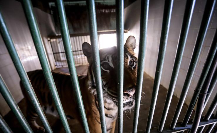 Los últimos animales del zoológico de Almuñécar