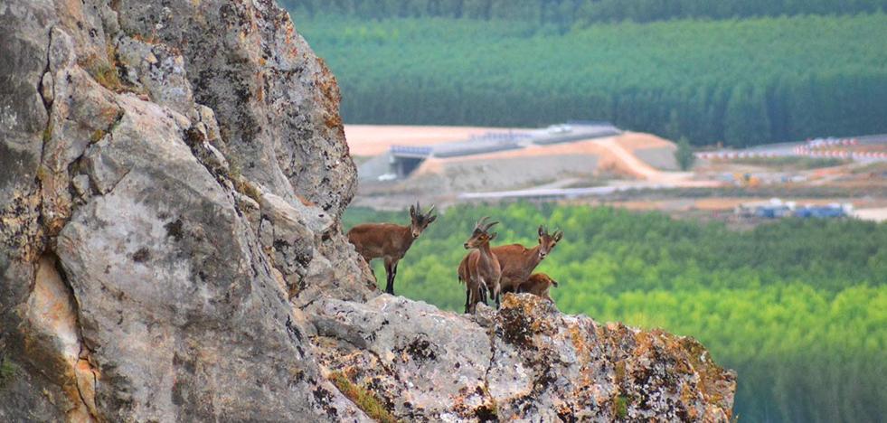 Las montesas colonizan Sierra Elvira